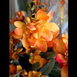 Κλαδί Φρέζα πορτοκαλί