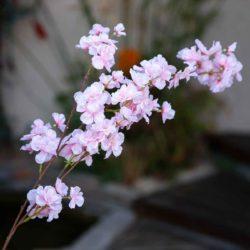 Κλαδί αμυγδαλιάς ροζ ανοικτό, ύψους 90cm